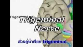 Cranial nerve  Song (Thai)