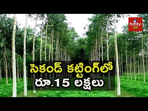 Sandalwood Cultivation | Melia Dubia (Malabaru Vepa) Cultivation | hmtv Agri