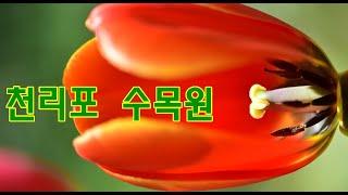 천리포수목원 해설, 민병갈 원장님