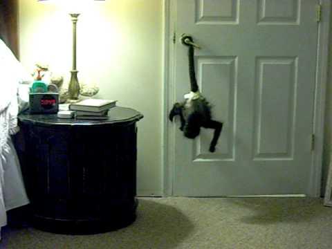 mickey the monkey opens the bathroom door & mickey the monkey opens the bathroom door - YouTube