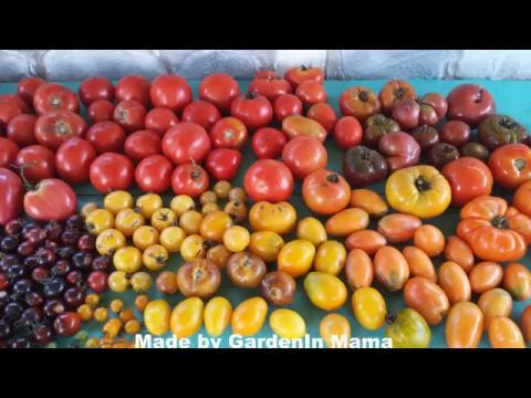 Put do savršenog paradajza
