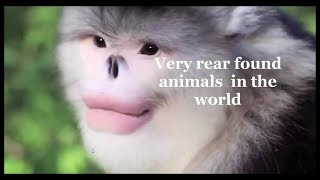Top 5 animals you didn't know existed in the world