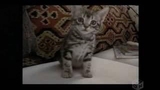 「グーグーだって猫である」テーマソング.