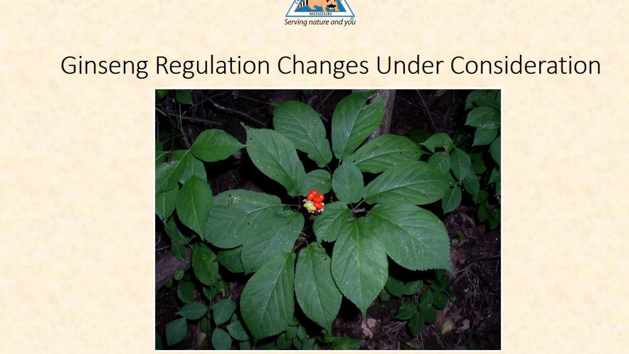Potential Revisions to Ginseng Harvest Regulations