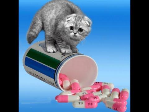Таблетки от глистов у человека: ТОП самых эффективных