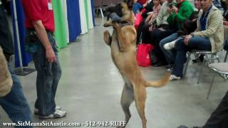 Austin 2011 Spring Home & Garden Show Dog Obedience And Safety Discussion Highlights