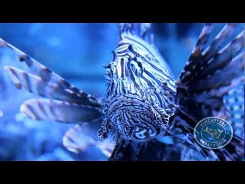 Fincasters Episode 18: Lionfish Spines