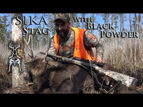 Sika Stag With Black Powder Modern Assassins MARSH CHASE Maryland Eastern Shore