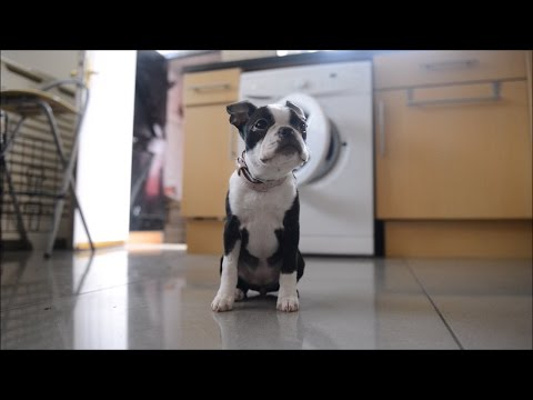 tiny-puppy-has-miracle-escape-after-being-in-tumble-dryer-for-30-minutes