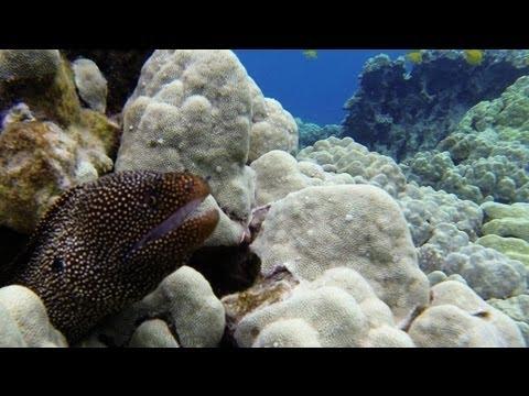 Kealakekua Bay Captain Cook Snorkeling Big Island Hawaii