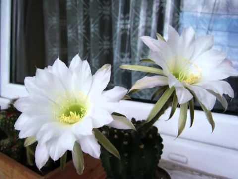 ดอกไม้ สวยๆ