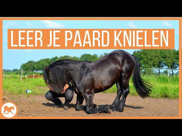 Leer jouw paard knielen!