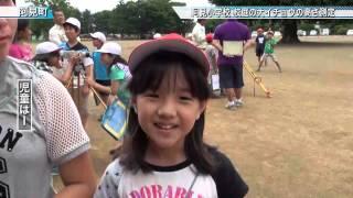 阿見小学校 校庭の大イチョウの高さ測定〈阿見町〉茨城新聞ニュース(2015.7.2)