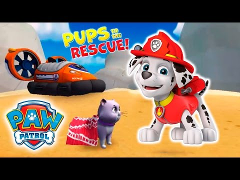 Pups to the Rescue!  The Bay
