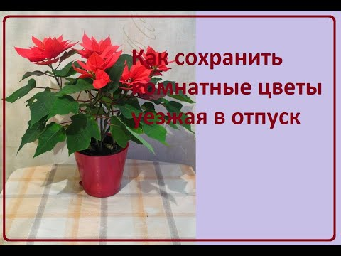 Вопрос: Как уберечь от высыхания домашние растения уезжая в отпуск?