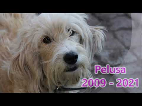 Download Pelusa