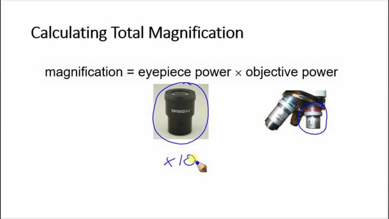 Calculating total magnification - YouTube