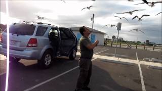 Seagulls in flight up close Port Lavaca Victoria Texas HD