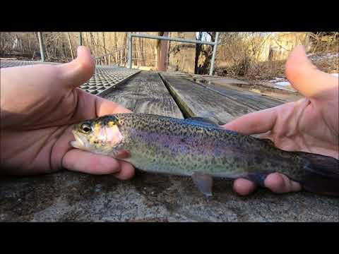 Winter Trout Fishing Patapsco River Daniels Area (CATCH AND COOK)