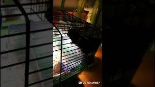 Хомячок Арни хитро придумал заниматься спортом. Смешное видео про животных. Девочка Машка.