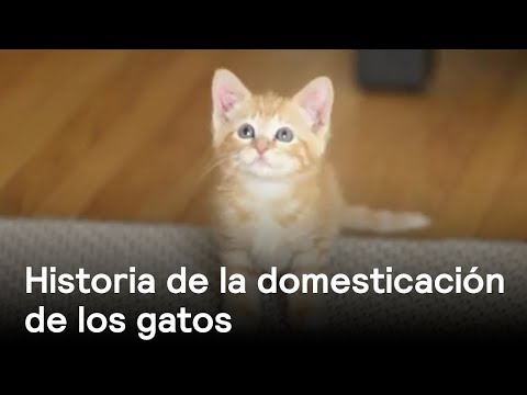La historia de la domesticación de los gatos