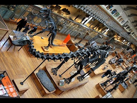 Places to see in ( Paris - France ) National Museum of Natural History