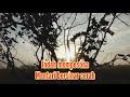 Suasana Alam Pagi Hari Di Pedesaan Backsound Relaxing Music  Mp3 - Mp4 Download