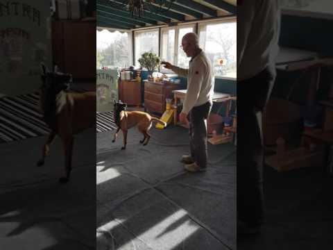 Spectacle de chien Kentra la championne Tapis/Aboie Roule Tourne Entre les jambes Avant/Arrière