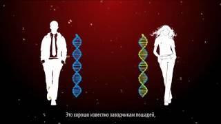 СЕКС и РАЗВРАТ в России HD, 720p
