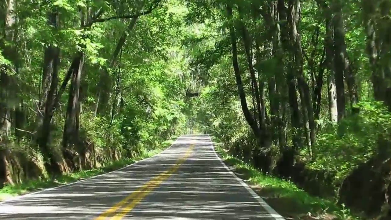 Tallahassee Canopy Road Florida & Tallahassee Canopy Road Florida - YouTube