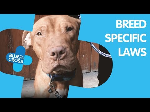 End Breed Specific Legislation | Blue Cross | Duncan's Story