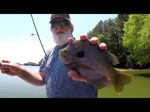 HUGE BLUEGILL!!! Bluegill Fishing With Jigs