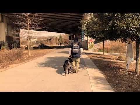 Rockstar Australian Shepherd Off Leash Heel! | Top Rated Georgia Dog Training