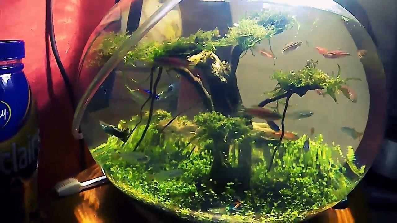 Aquarium Bulat Aquascape Youtube
