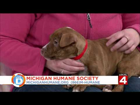 adopt-a-pet-on-mike-morse!-mike-morse-law-firm-855-mike-wins--live-in-the-d:-local-4-pet-of-the-week