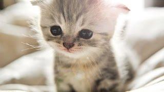 Милейшие котята во сне / Cats in the Dream