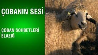 Çobanın Sesi - Çoban Sohbetleri / Elazığ