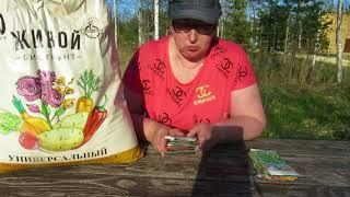 Наша дача. Подготовка грядки под огурцы в теплице и посев семян.