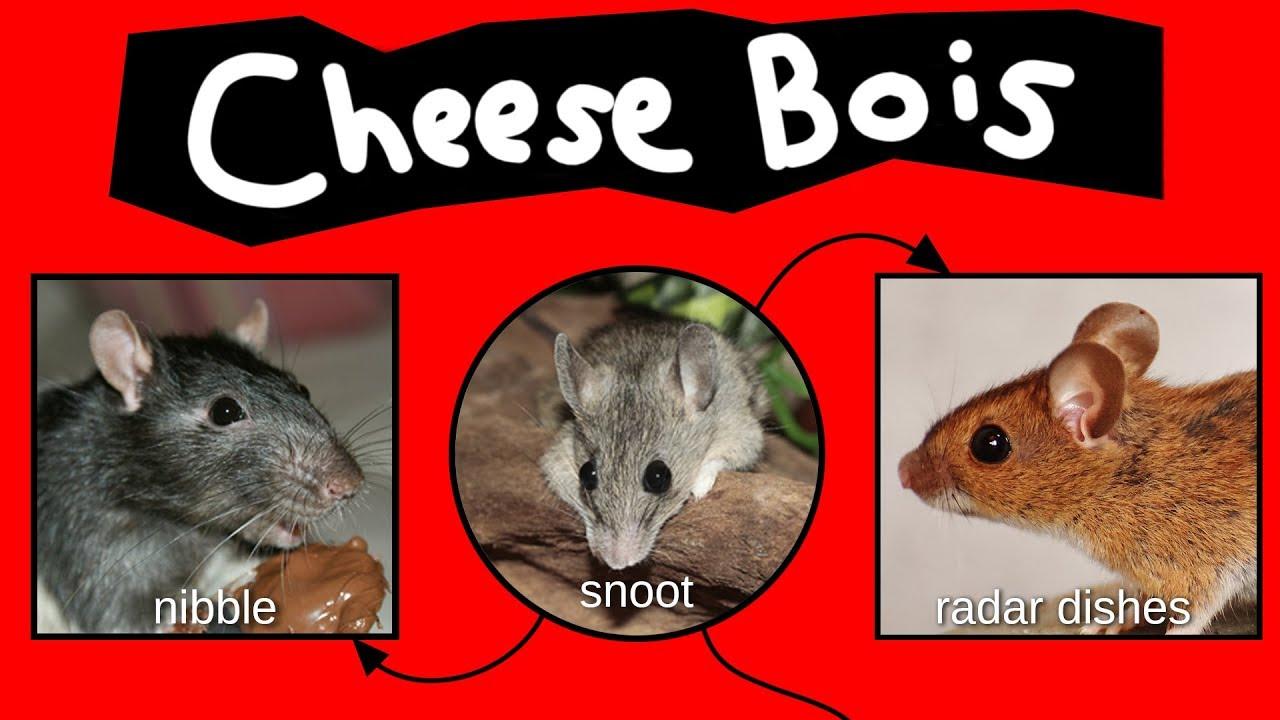 cheese-bois