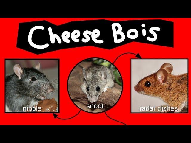 Cheese Bois