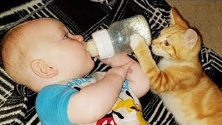 Cats Protecting & Taking Care Babies Videos Compilation 2019 😸 Cat Loves Babies