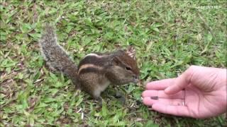 Приколы с животными. Забавные бурундуки.  Funny chipmunks.
