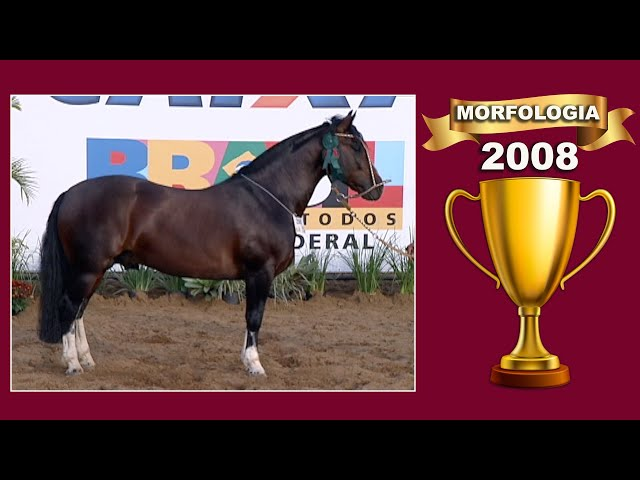 NOSTALGIA MORFOLOGIA 2008