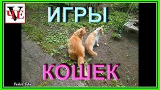 Игры кошек (забавные игры животных)