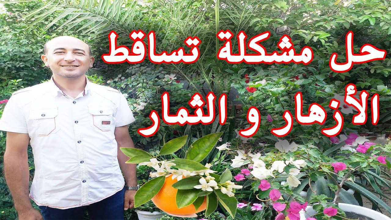 أسباب و حلول تساقط أزهار و ثمار الاشجار, حل مشكلة تساقط الازهار و الثمار, To Avoid Flowers Dropping