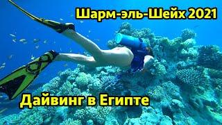 Даи винг в Шарм эль Шеи хе 2021 Кораллы и мусор в Красном море в Египте Снорклинг в Рас Мохаммед