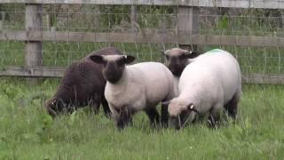Nicole lamb tag upgrade.m2ts