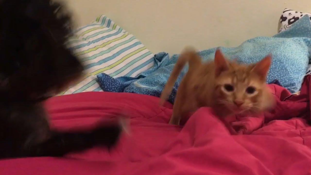 Dog Prevents Kitty Sneak Attack