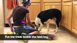 Teach Your Dog To Put Their Toys Away - Part 1 - Shape Fest 2012