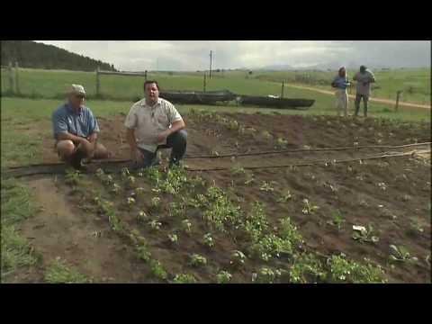 Vegetable Garden Irrigation System